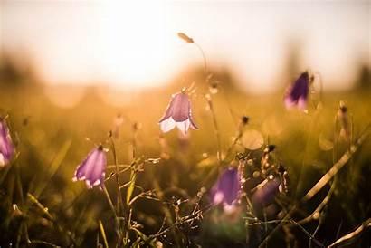 Jonna Jinton Flowers Artikel Eintsy Fran Cherry