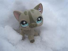 lps shorthair cat lps shorthair cat by marisapony on deviantart