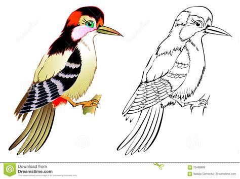 colorful  black  white pattern woodpecker stock