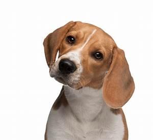 Petsittercom pet sitting dog walking kennels and pet for Be a dog sitter