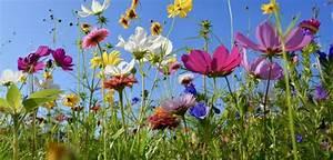 Blumen Im Juli : welche blumen bl hen im juni haus garten ~ Lizthompson.info Haus und Dekorationen