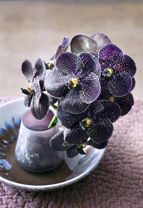 orchidee mooi wat bloemen doen