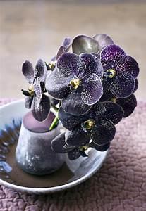 Schöne Orchideen Bilder : die orchidee toll was blumen machen ~ Orissabook.com Haus und Dekorationen