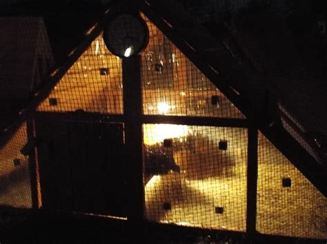 winterize our chicken coops how cold is cold for chicken