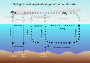 carbon sink wikipedia the free encyclopedia