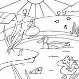 Pond Sloot Coloring Fish Pages Duck Drawing Ducks Colouring Het Koen Lot Template Ponds Printable Frog Boek Getdrawings Een Grote sketch template