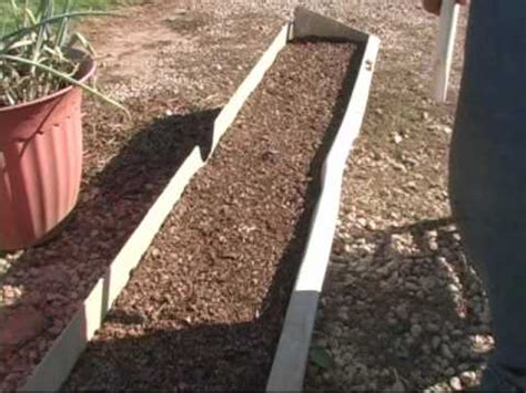 starting onions  seed youtube