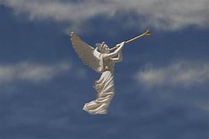 Angels Trumpet by David Lee Thompson