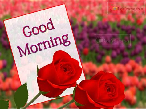 good morning wishes with flowers images life style by