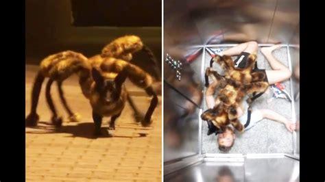 die unglaubliche mutation vom hund zur riesenspinne youtube
