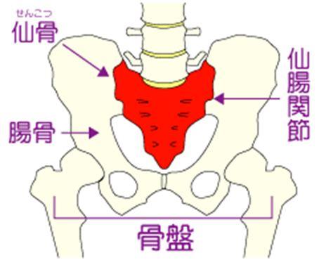 骨盤 整体 カシャーン