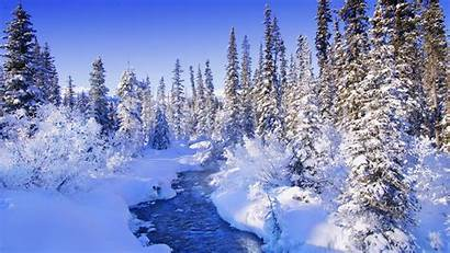 Forest Snowy Winter River Wallpapers Nature Snow