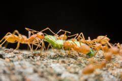 Ameisen Im Garten : rote bete anbauen so gelingt der anbau ~ Frokenaadalensverden.com Haus und Dekorationen