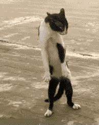 Funny Cats GIF - Find & Share on GIPHY