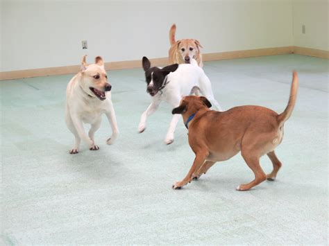 country comfort kennels country comfort kennels c for pets in md