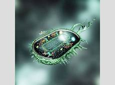 Bacteria Programmed to Develop Basic Computing Elements