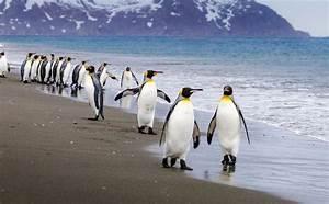 Penguin popularity Penguin profiles: 10 fascinating