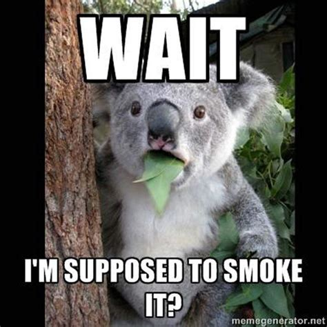 Funny 420 Memes - 420 2015 all the memes you need to see heavy com page 11