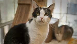 petsmart cats petsmart charities