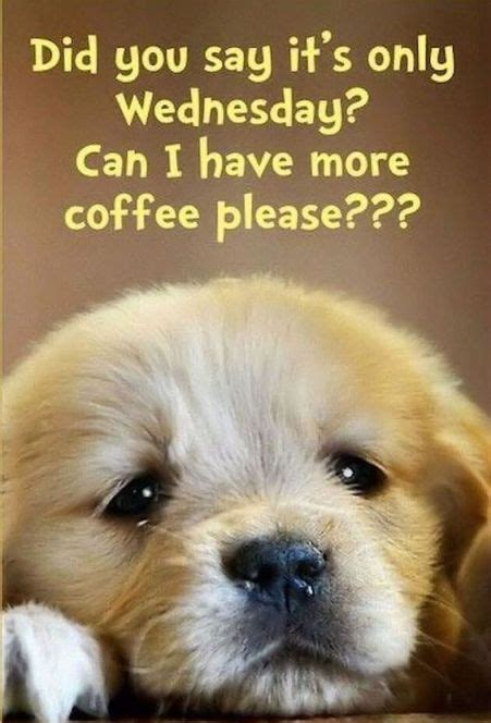 60 Wednesday Coffee Memes, Images & Pics to Get Through ...