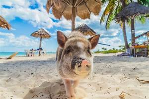 6 beaches with unbelievable animals - eDreams Travel Blog