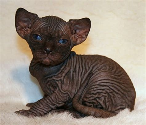 22 Of the World s Ugly Yet Cute Baby Animals The Zoo Zoom
