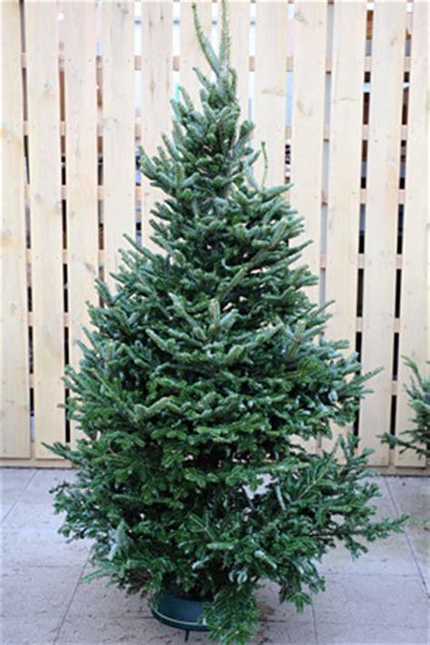 christmas treesrhs gardening