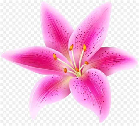 tiger lily lilium stargazer pink flowers clip art pink