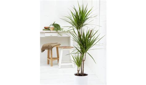 apartment plants unforgettable indoor plant displays ideas