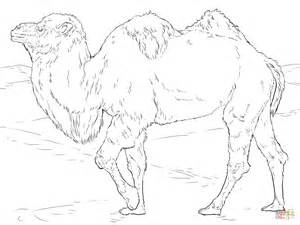 Kleurplaat Stokstaartje by Realistic Bactrian Camel Coloring Page Free Printable