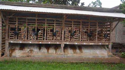 Kandang kambing yang sehat adalah kandang kambing yang mempunyai desain yang baik untuk pembuangan kotoran dan tempat untuk menaruh makanan kambing itu sendiri. Top Konsep 33+ Gambar Lantai Kandang Kambing