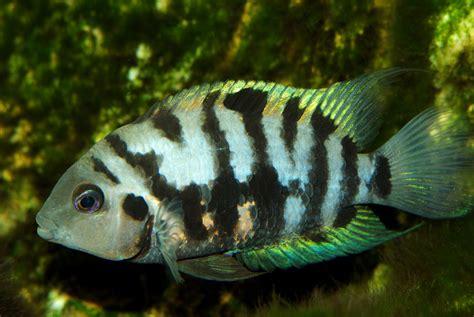 cute  funny names   pet fish   crack