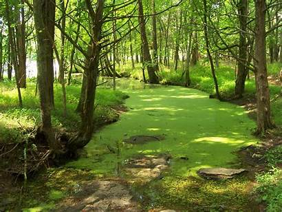Friendly Eco Nature Wallpapers State Tennessee Forests