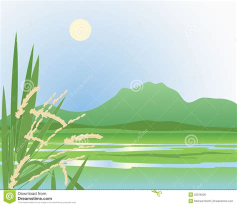 paddy field background royalty  stock image image