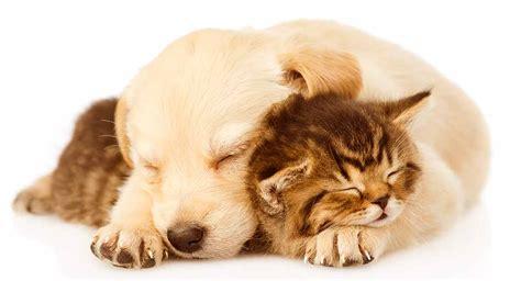 Pet friendly dog breeds