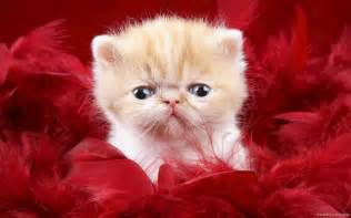 baby cats kitty world baby kitten pictures