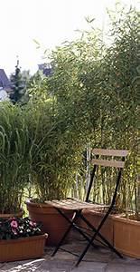 Bambou En Pot Pour Terrasse : am nagez des bambous en haie jardinerie truffaut conseils plantes de haie truffaut ~ Louise-bijoux.com Idées de Décoration