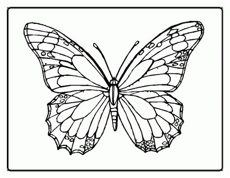 butterfly drawings  color coloring home