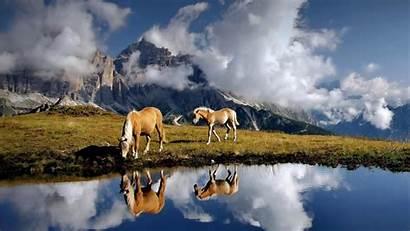 Horse Wallpapers Desktop Backgrounds