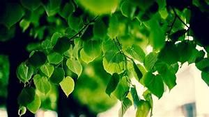 Foliage, Macro, Blurred, Bokeh, Sunlight, Green, Nature, Branch, Trees, Wallpapers, Hd, Desktop