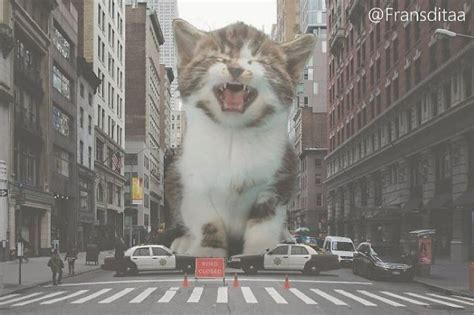 man photoshops giant cats  everyday scenes