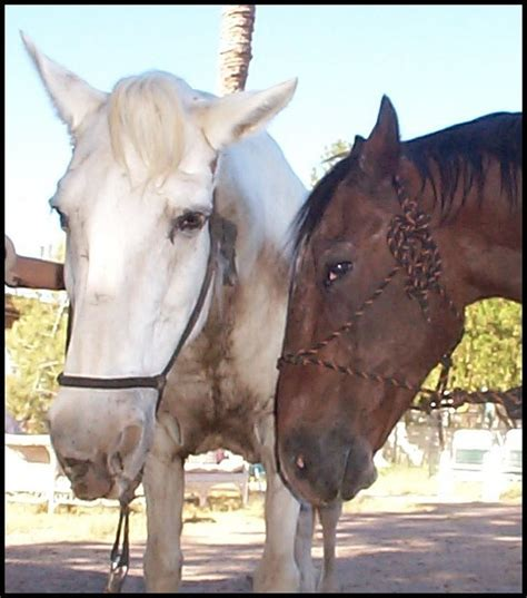 blind horse guide finds him friend abuse wildhorse rescue ranch