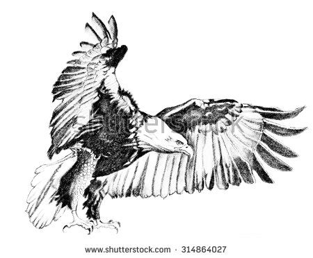 Flying Bald Eagle Illustration