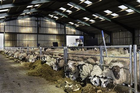 shed for sheep sheep housing sheep sheds r e buildings