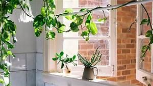 Plante Intérieur Grimpante : plante int rieur vignes d 39 appartement tendances c t maison ~ Louise-bijoux.com Idées de Décoration