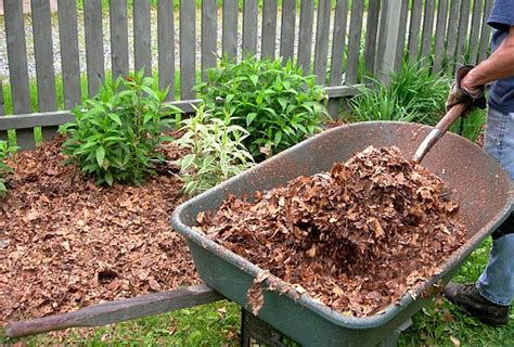 what can i use instead of mulch leaf mulch nature s bargain southern wild