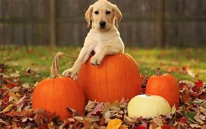 Pumpkin Fall Autumn Wallpapersafari Adog