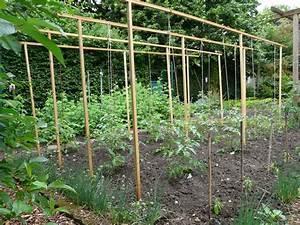 Comment Tuteurer Les Tomates : tuteurer les tomates ro05 jornalagora ~ Melissatoandfro.com Idées de Décoration