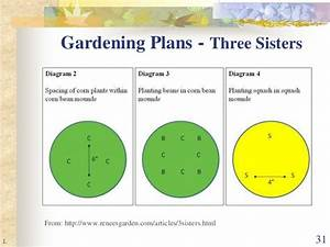 Companion Planting  The Real Story