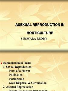 Asexual Reproduction In Plants Sereddy